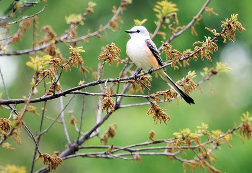 Tulsa Bird