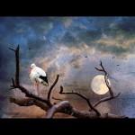 Stork Moon