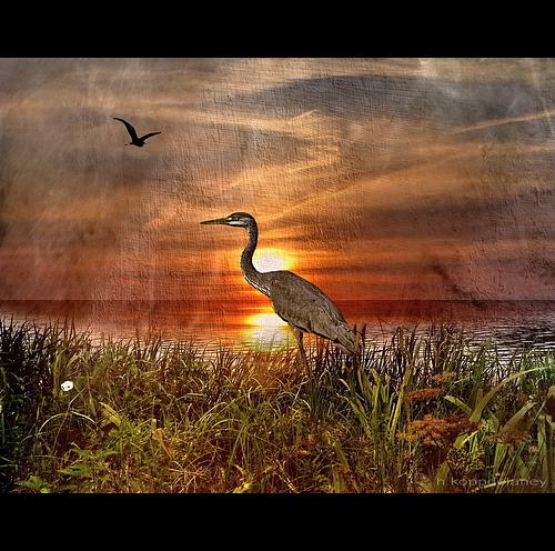 Heron - Fischreiher