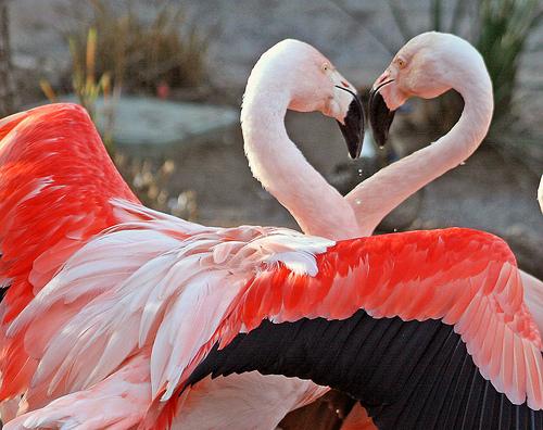 Case Study Reiki Helps Find True Love