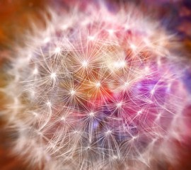 Reiki and Quantum therapy
