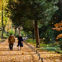 Reiki for Alzheimer's Patients