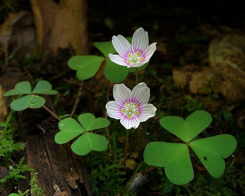 Healing the Root Chakra