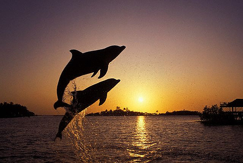 Dolphin Reiki
