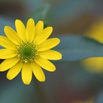 Healing With Reiki & The Color Yellow