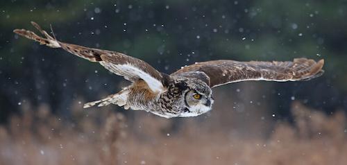 Owl Energy and Reiki