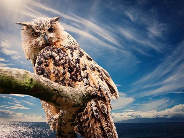 Owl Energy & Reiki