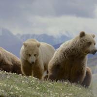 Embracing Your Power With Reiki & Bear Energy