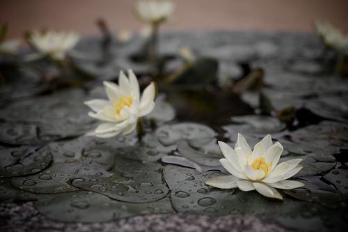 Reiki is primarily self healing
