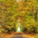 Fall Season Reiki