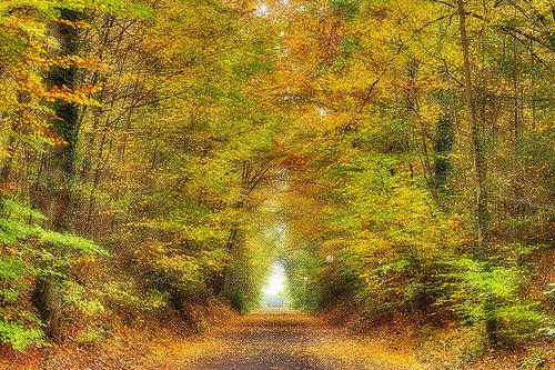 Fall Season Reiki
