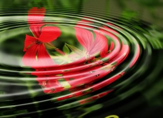 Reiki Practice and the Empowering Energy Within