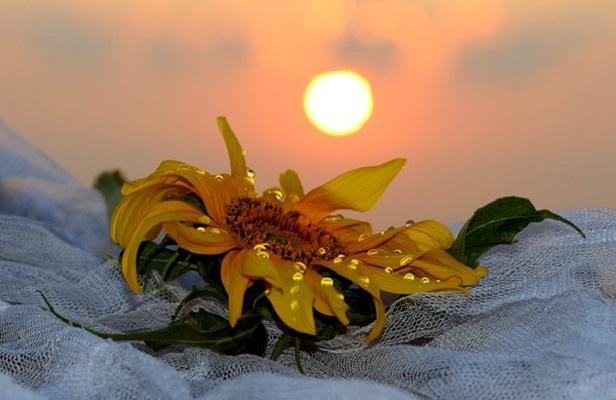 Reiki and Solar Energy