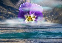 Miracle Pearls Meditation