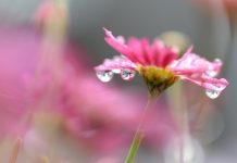 Healing Menstrual Cramp Pain with Reiki