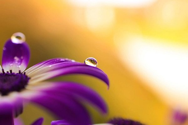 Article Quan yin Lavender Flame
