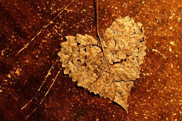 Healing broken hearts Reiki Rays
