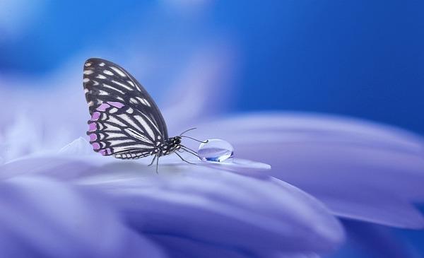 Rejuvenate Yourself with Meta-healing (Farādarmāni)
