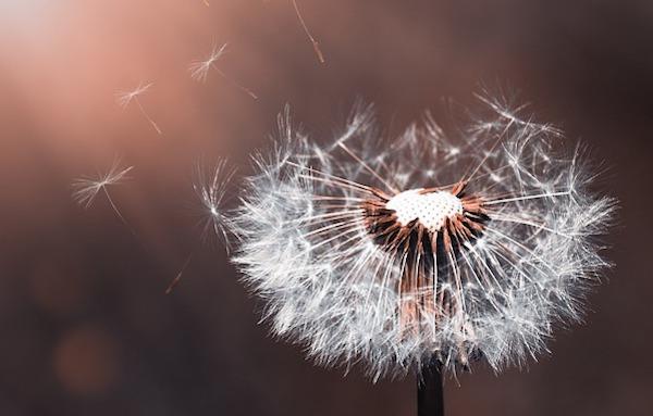 Healing With Angelic Zibu Symbols – Release