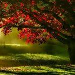 Reiki Inspiration from Autumn