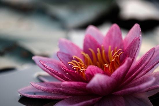 Reiki as a Meditative Self Study