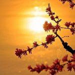 Gaining Insights through Reiki