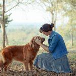 Animal Reiki - Healing Insights