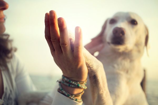 What Does Animal Reiki Look Like?