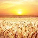 Reiki Harvest