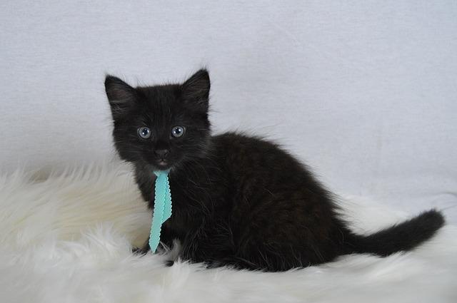 Pet Adoption with Tiger Reiki