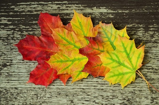 Fall is Coming… Let Go