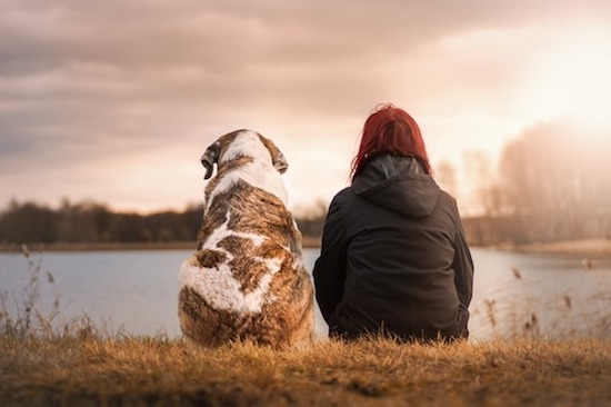 Treat your Pet with Reiki